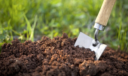 Fresh Connections: Promoting Urban Agriculture & Natural Resource Conservation Session 3: Life in the Soil – Digging Deeper