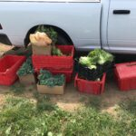 Gleaning efforts sponsored by Cortland County SWCD and local Main Street Farms