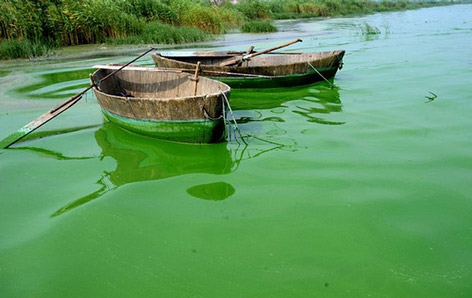 Blue Green Algae and HABs