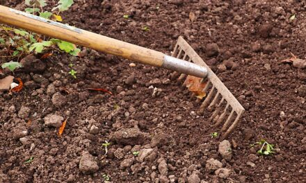Fresh Connections: Urban Agriculture & Natural Resource Conservation Series: Gardening 101